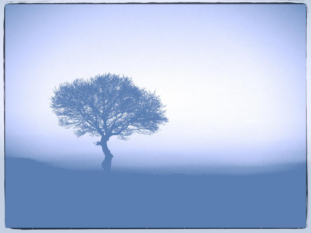 A lonley tree