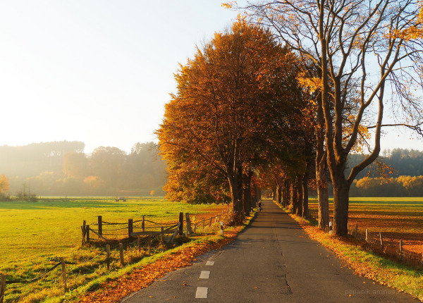 An avenue in the autumn