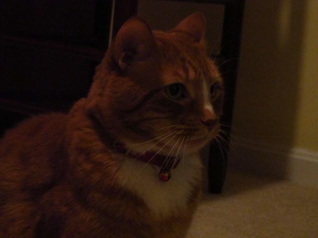 my cat Olliver