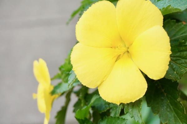 yellow flower 4.21.20