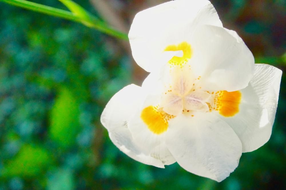 white flower 5.7.20