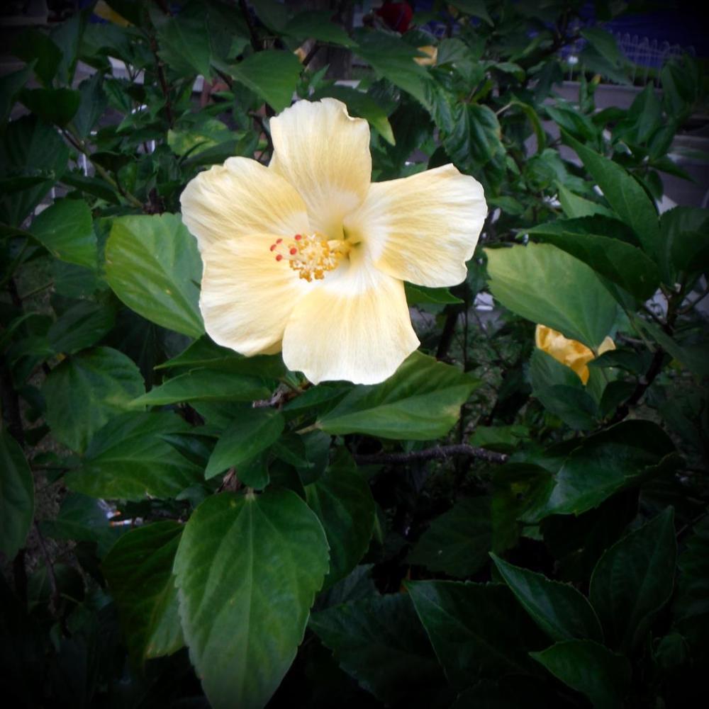 Local Flower