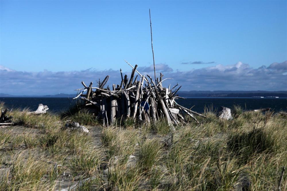 Driftwood shelter