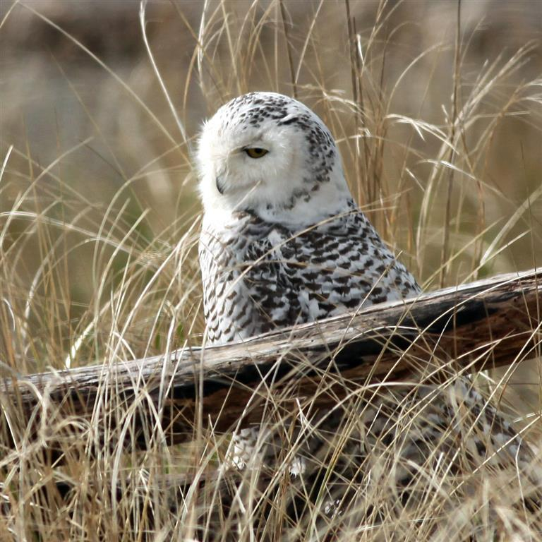 Portrait of a Beautiful Owl