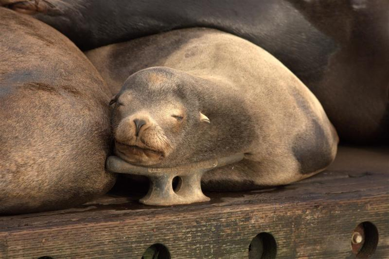 Asleep on a Cleat