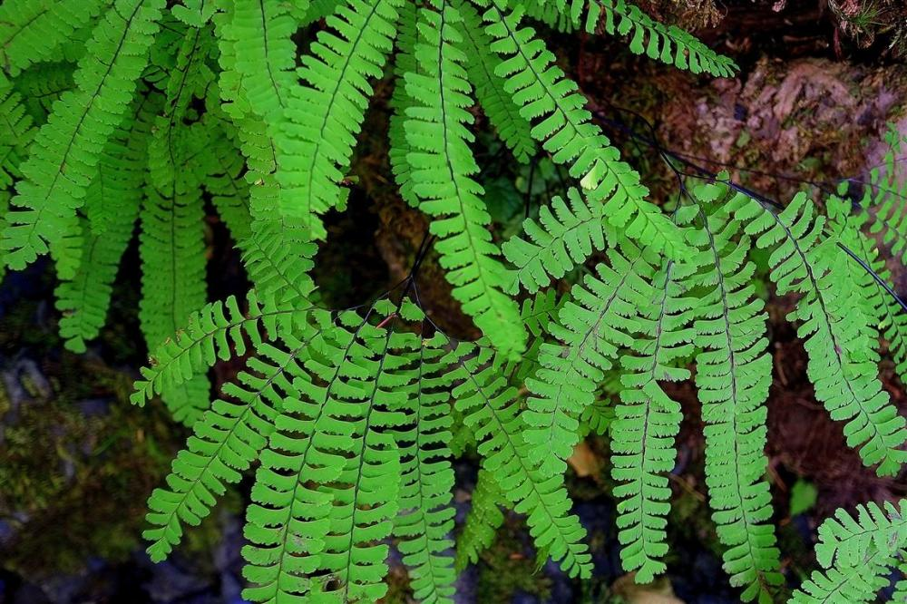 Rain forest folige - from above