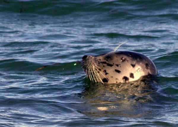 Seal surfacing next to me