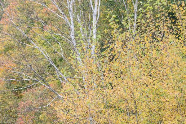 Fall colours 2