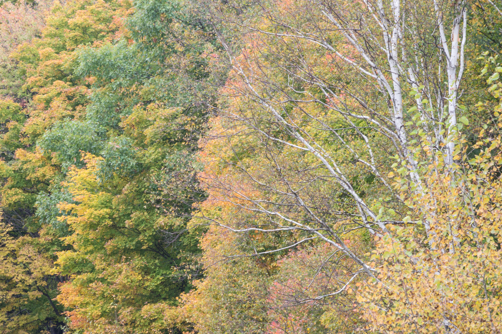 Fall colours 4