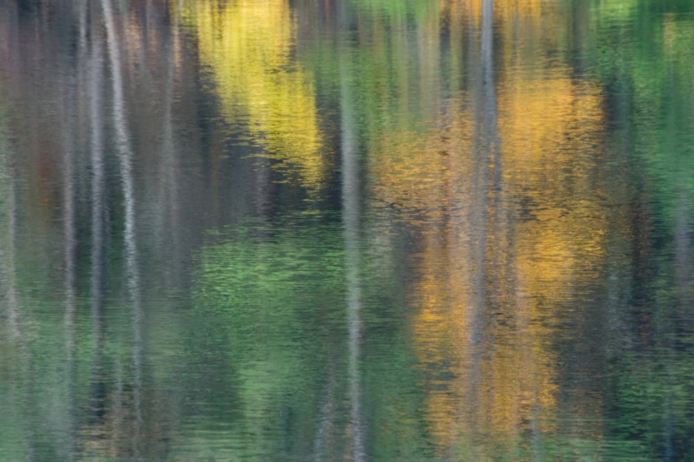 Forest reflection 4
