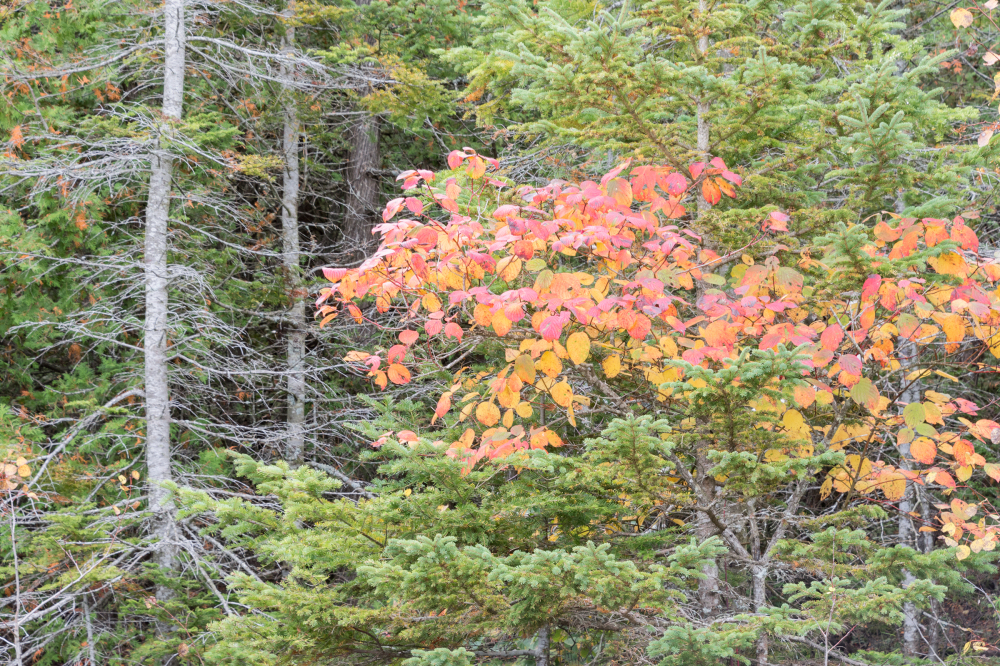 Autumn : Bruce Peninsula