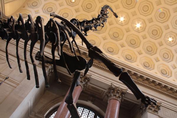 Dinosauro ovvero terribile lucertola