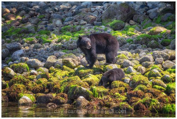 Mamma Bear and Cub