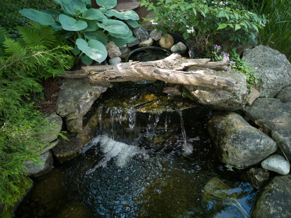 Garden Series #5: Pond Feature