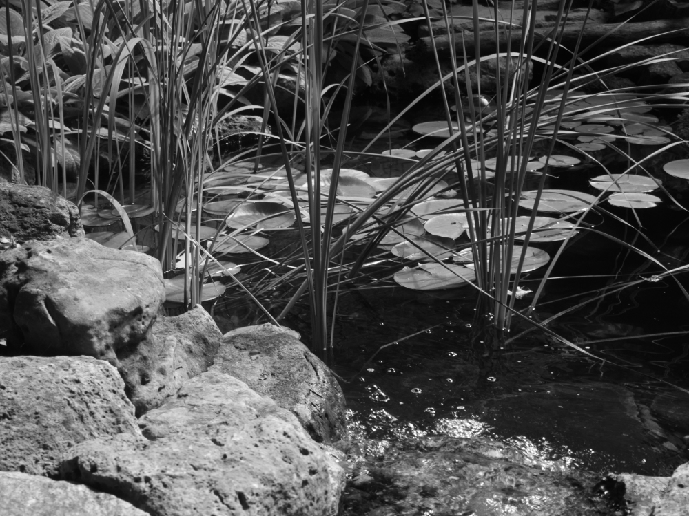 pond black and white