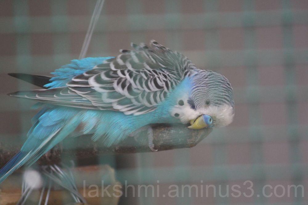 Blue coloured bird