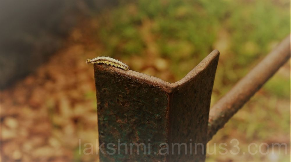 Worm on a fence