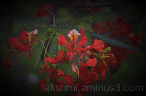 Flowers # 3