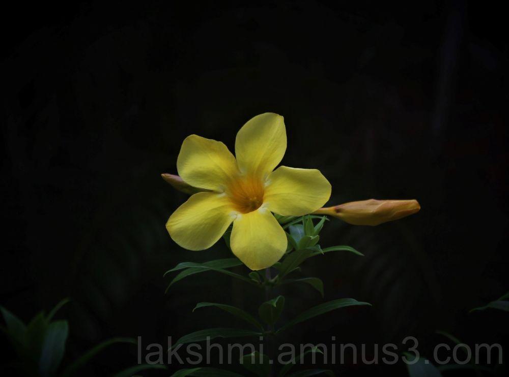 Flower # 5