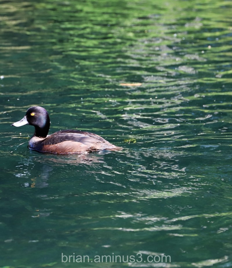 Scauping about