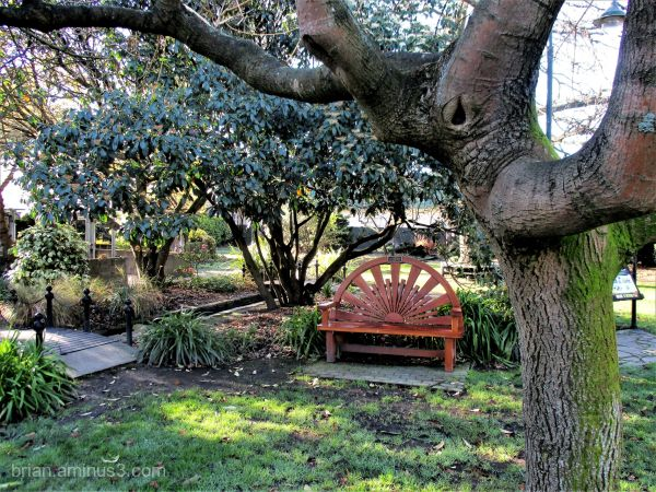 Tree And Garden Bench