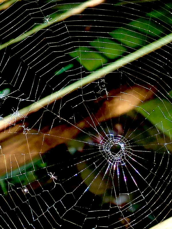 Spider web insect light shining