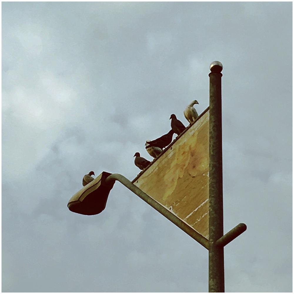 BirdsOnALightpole
