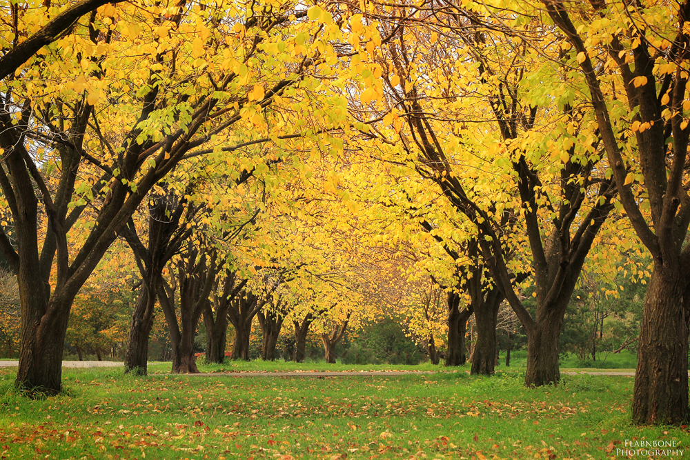Ruffey Lake Park - Doncaster Melbourne - autumn