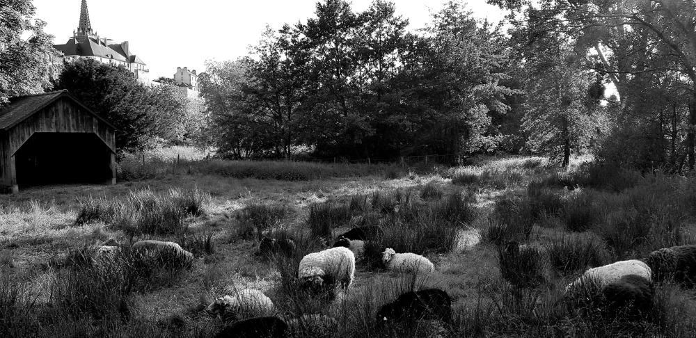 Dans des herbes hautes ...