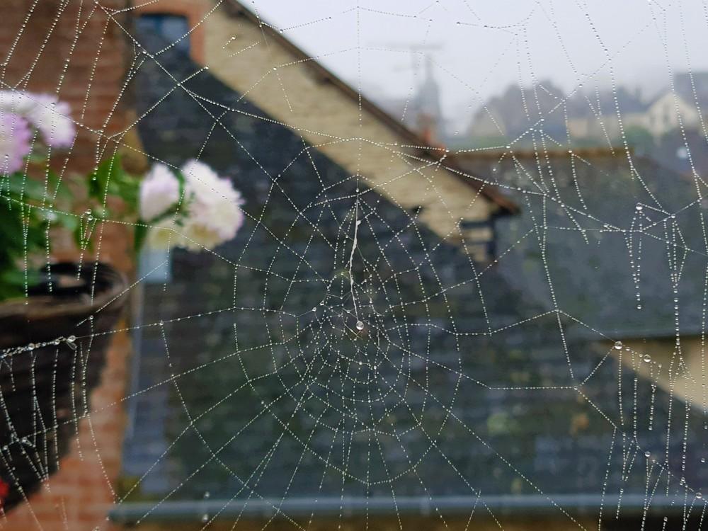 Toile d'araignée automnale
