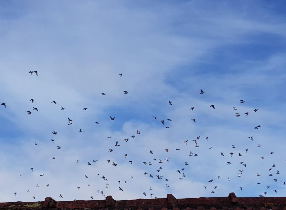 Traversant le dessus de mon toit
