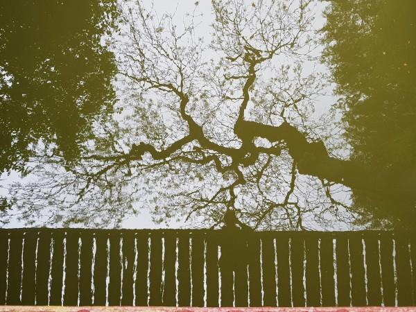 Reflet #54