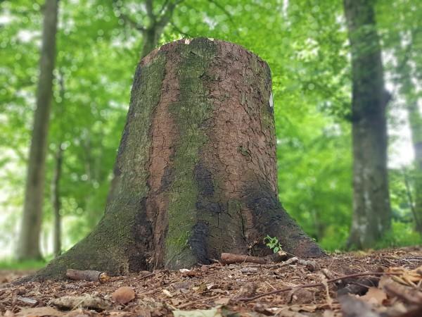 Un tronc qui ne sera plus jamais arbre♧