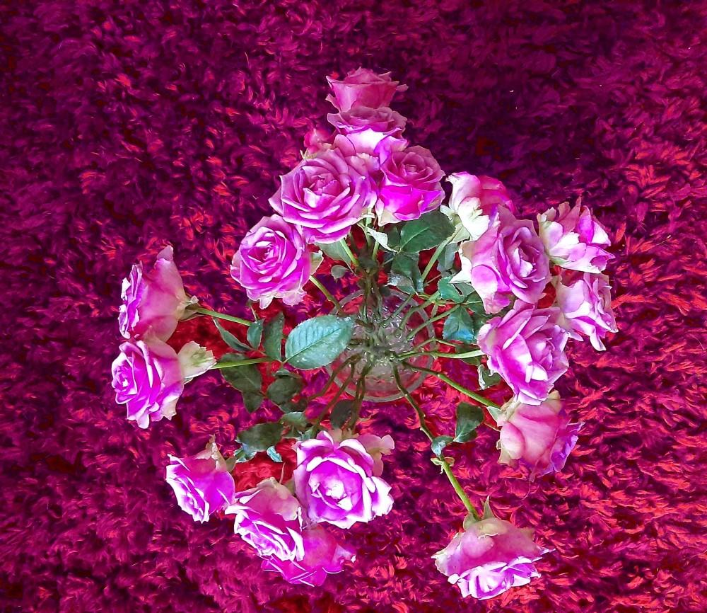 Deep Pink Roses