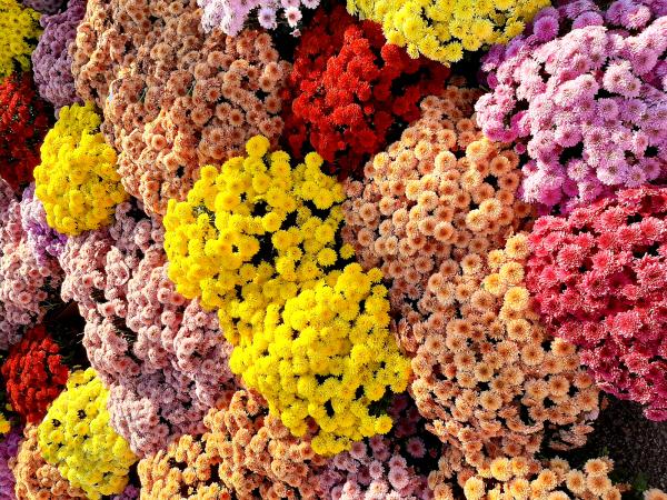 Autumn Treasures - Flowers