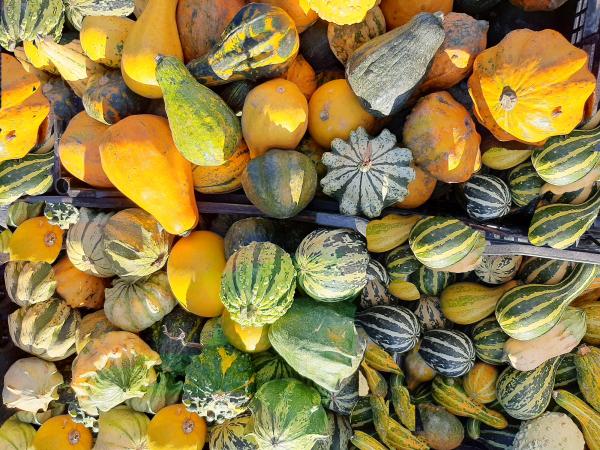 Autumn  Pumpinks