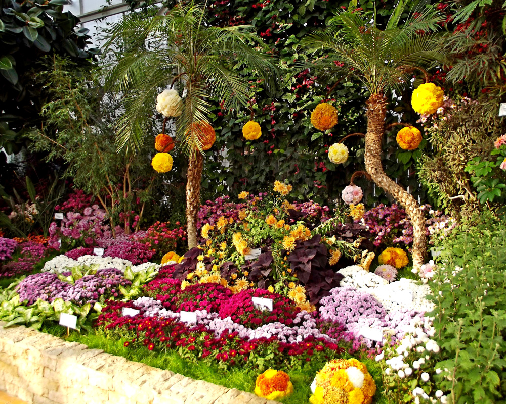 Autumn Flowers Exhibition