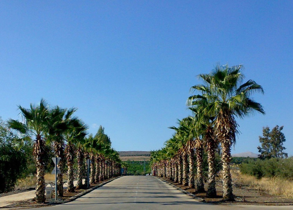 The Palm Alley