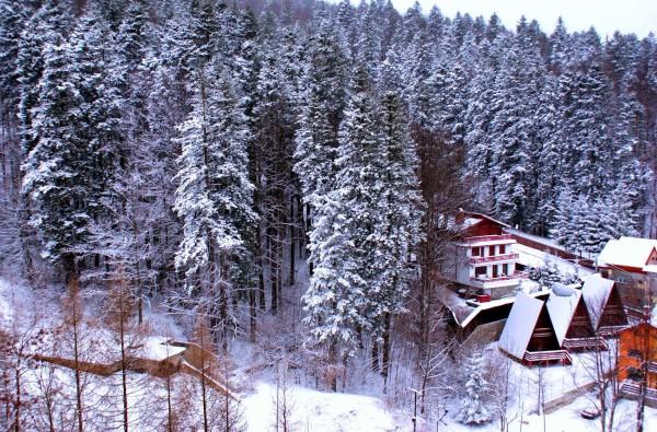 Advent 1- Wintertime