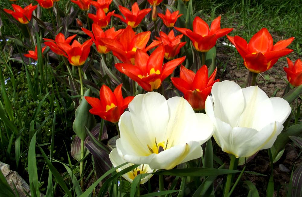 A Bit Of Springtime