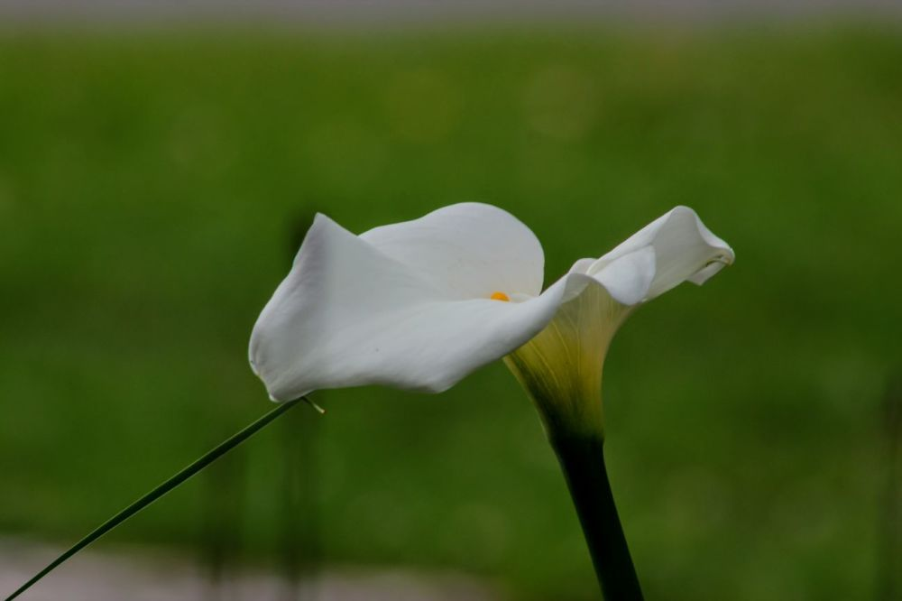 Fleur urbaine