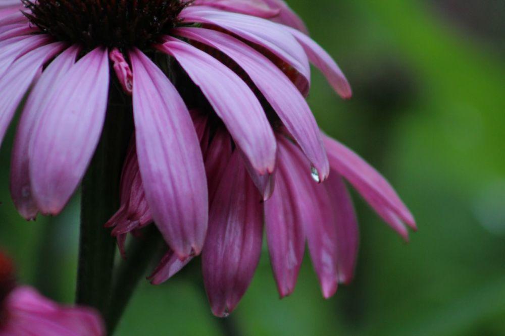 Apprécier la pluie