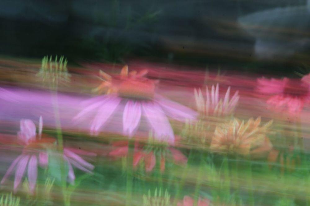 Je suis une fleurette