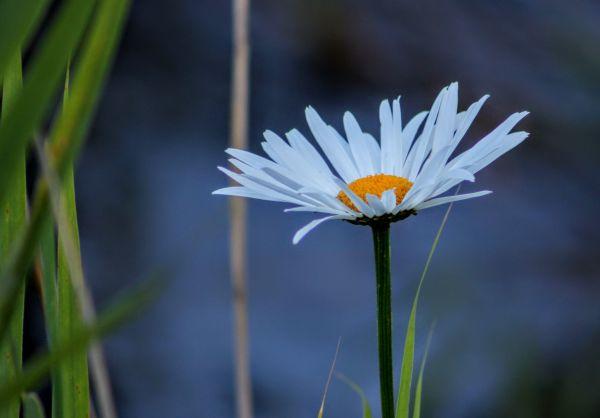 Allons conter fleurette!!!