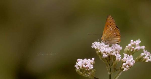 Les papillons sont bien là