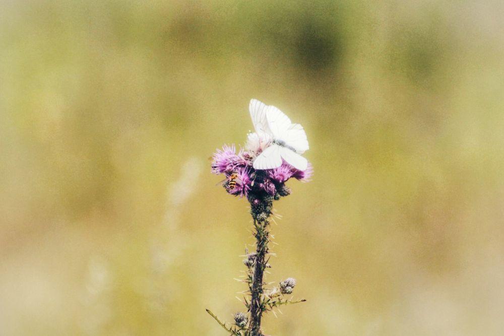 Douceur d'une fleur