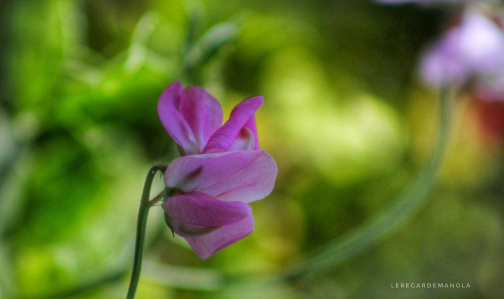 Florale