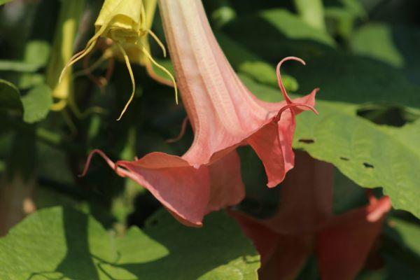 Une fleur  des forets devenue urbaine