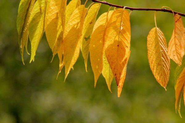 Debut d'automne