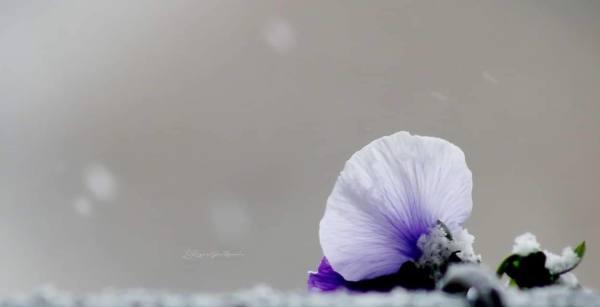 Fleur hivernale